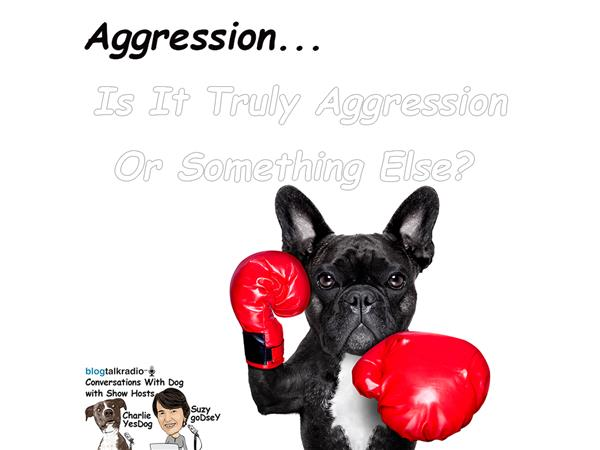 What is Aggression in Dogs? Can it be Changed?