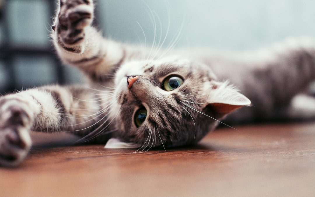 What I learned about separation anxiety from my cat